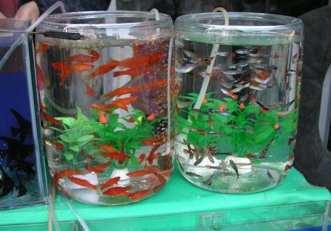 Crazyanimalz Small Fish Tanks Guppy Fish Fish Tank
