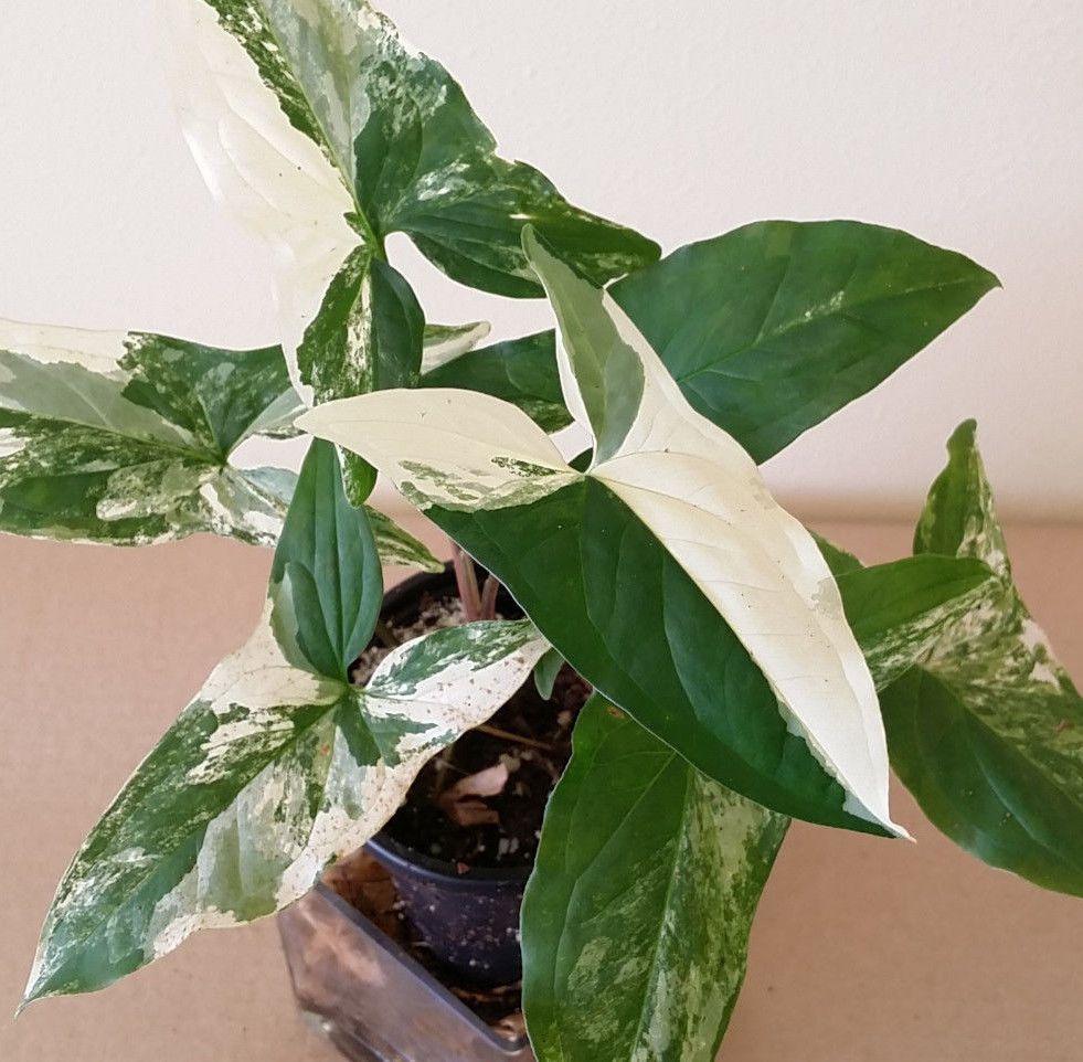 Pin On Pflanzen
