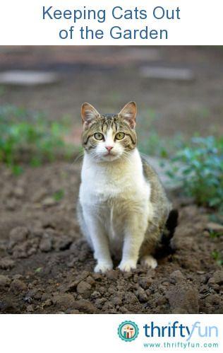 Keeping Cats Out Of The Garden Gardens Cat And Garden Ideas