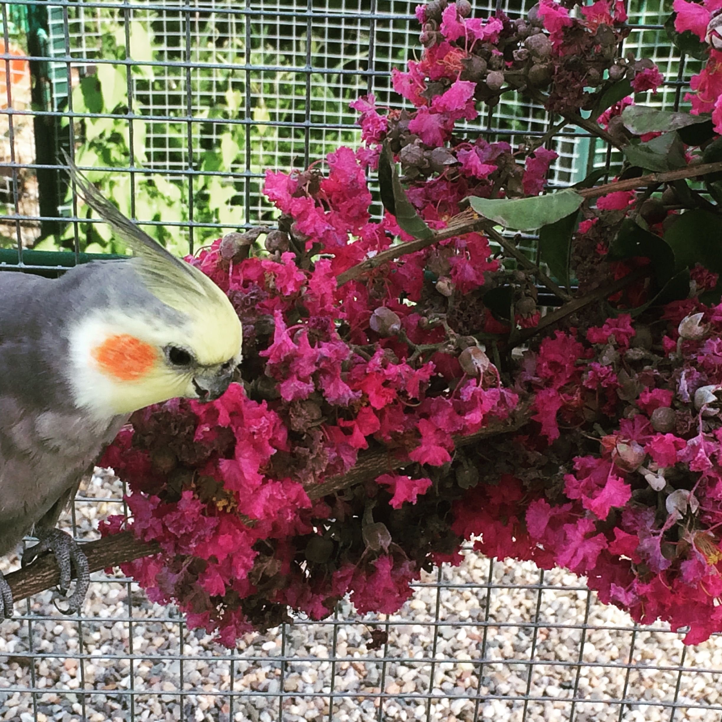 Enrichment with fresh branches and flowers of Crepe Myrtle