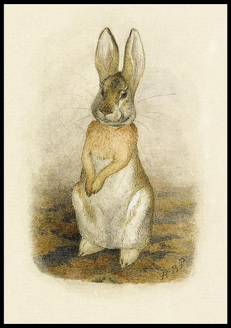 Hare sitting on a patterned carpet | Beatrix potter