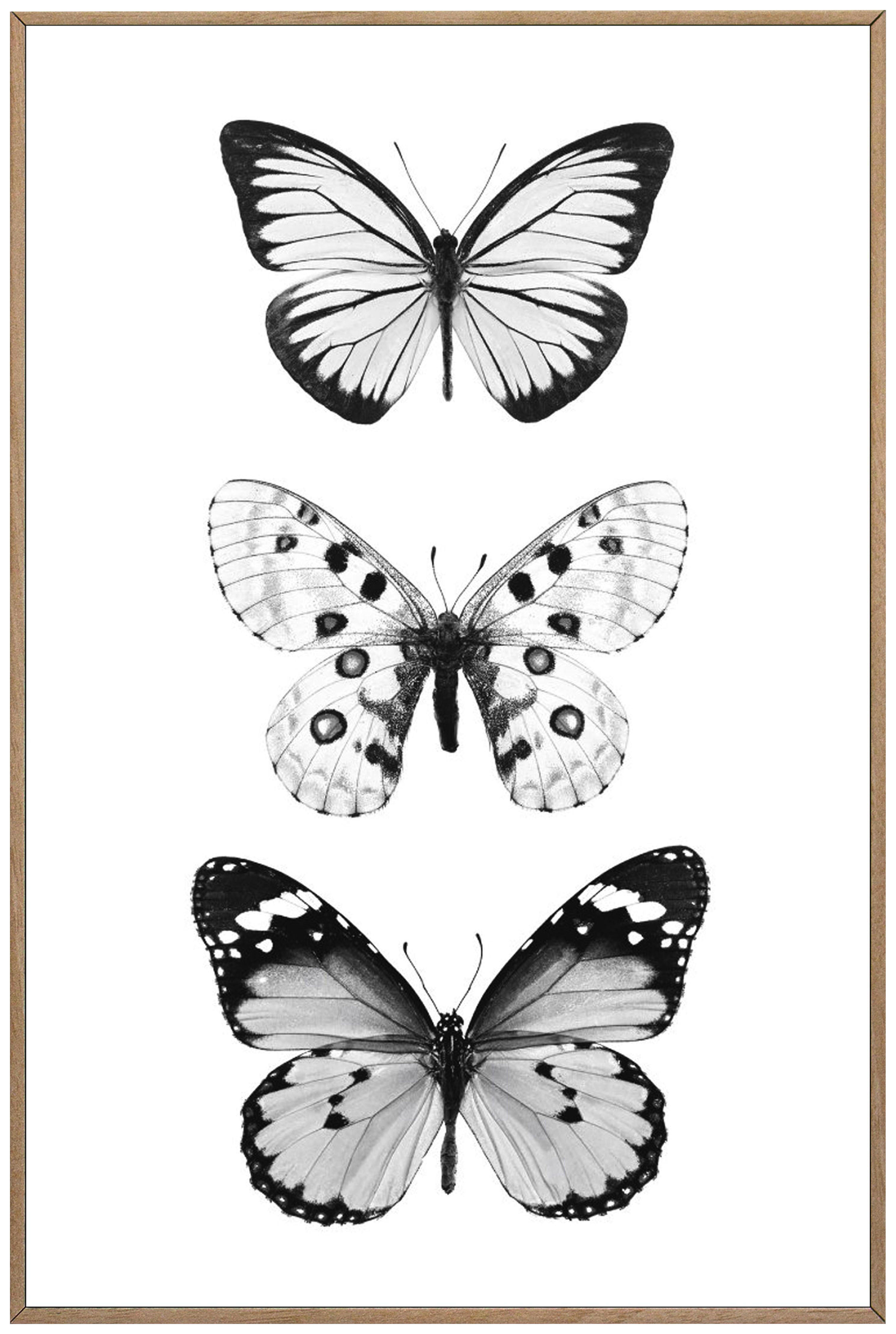 Bild Von Schmetterlingen In Schwarz Weiss Schmetterlingszeichnung Hintergrundbilder Schwarz Weiss Zeichenvorlagen