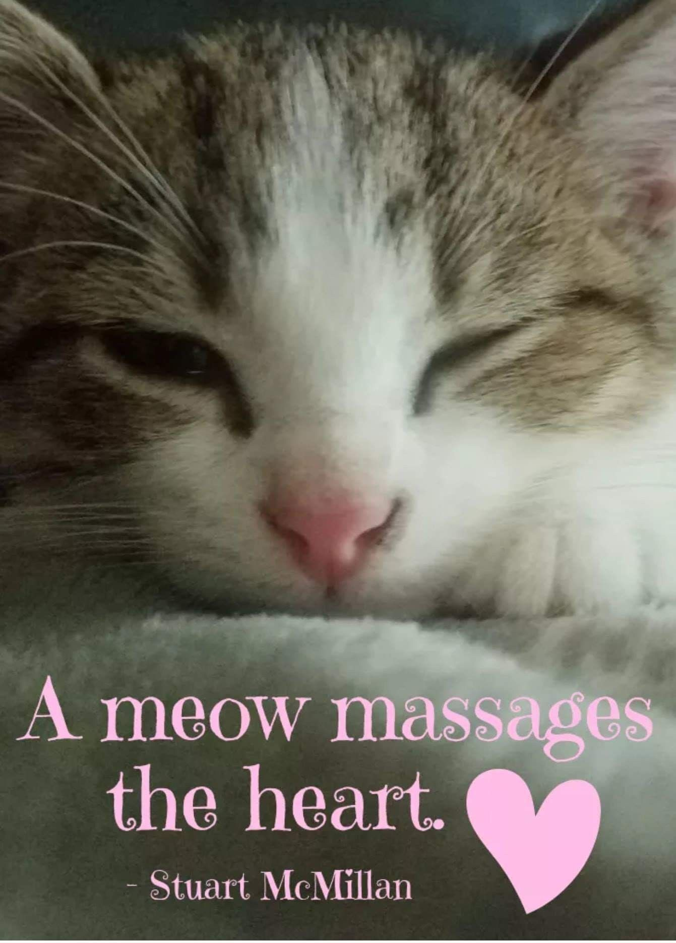 Pin By Cindy Bentley On Amazing Purrs Why Do Cats Purr Pet Insurance Reviews Cat Having Kittens