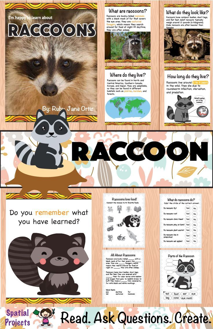 All About Raccoons Nonfiction Unit Forest animals