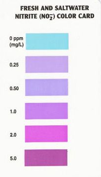 Api Nitrite Water Test Colour Chart Instruction Test Tube Color Card