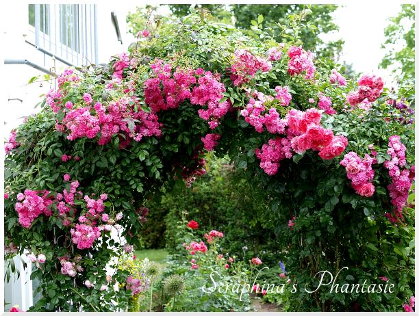 Seraphina´s Phantasie: Die Zeit der Rosen