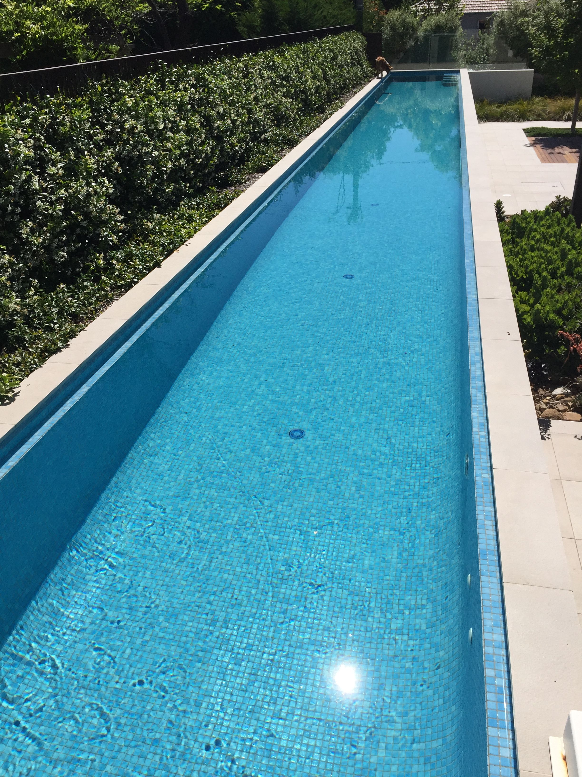 Above Ground 25m Lap Pool With Landscaping Jasmine Hedge Is Ideal Near Pool As Very Little Le Backyard Pool Landscaping Dream Pool Indoor Garden Swimming Pool