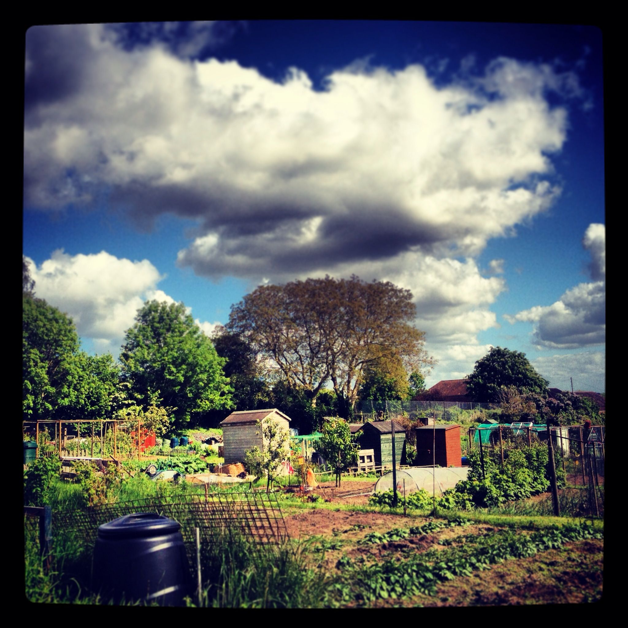Getting back to nature at the allotment