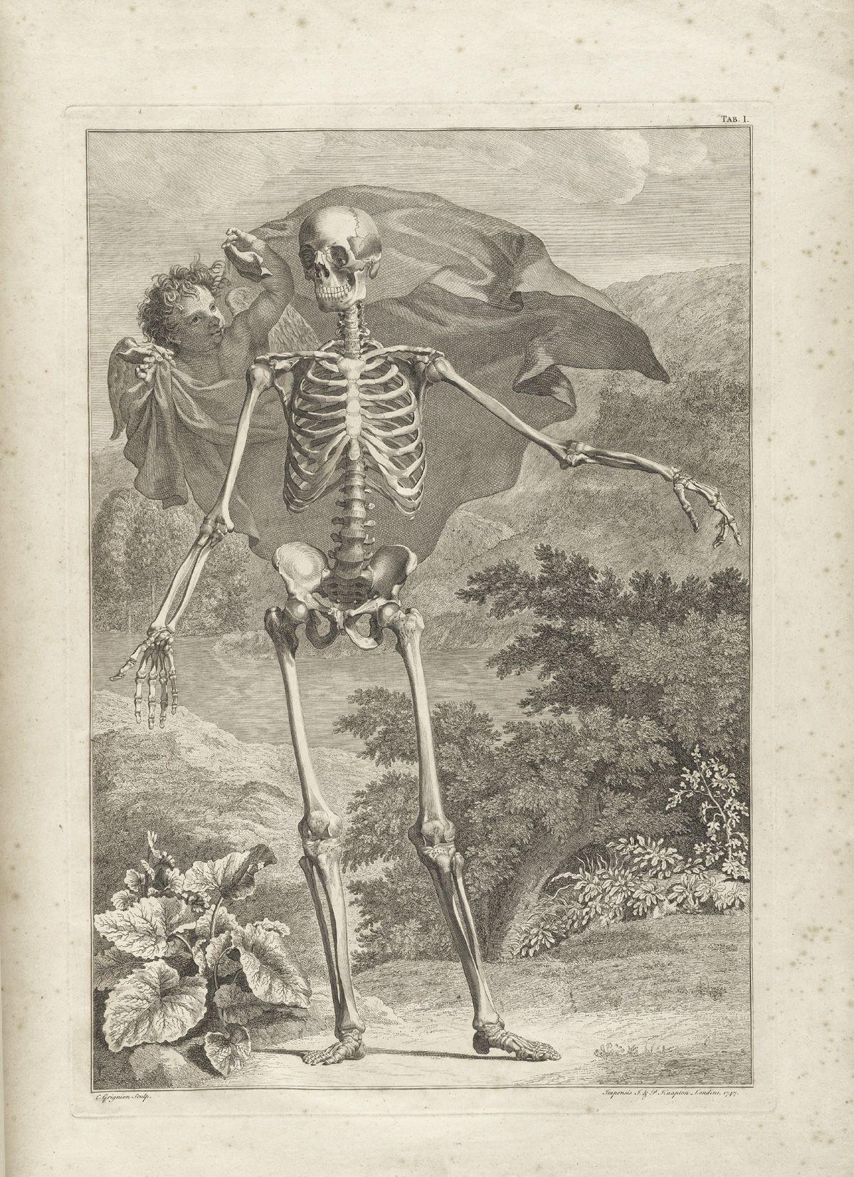 Anatomia. Grabado antiguo.Albinus | Figura humana | Pinterest ...