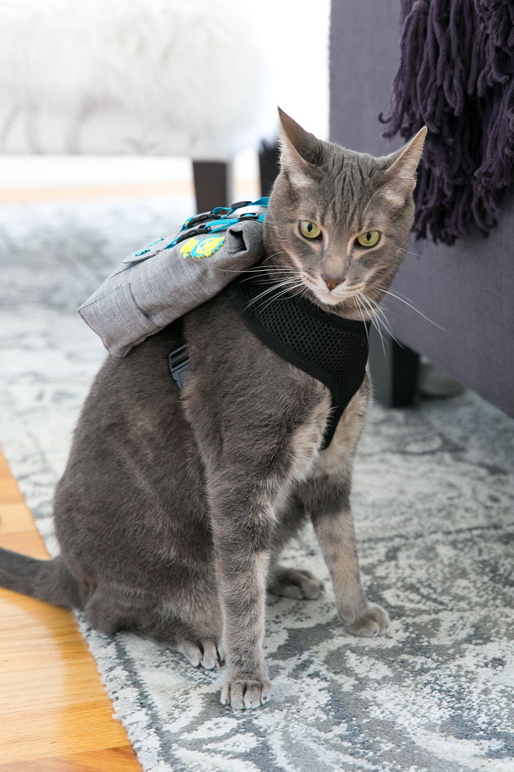 b13ff16c3a65 Your Cat Wants a Backpack