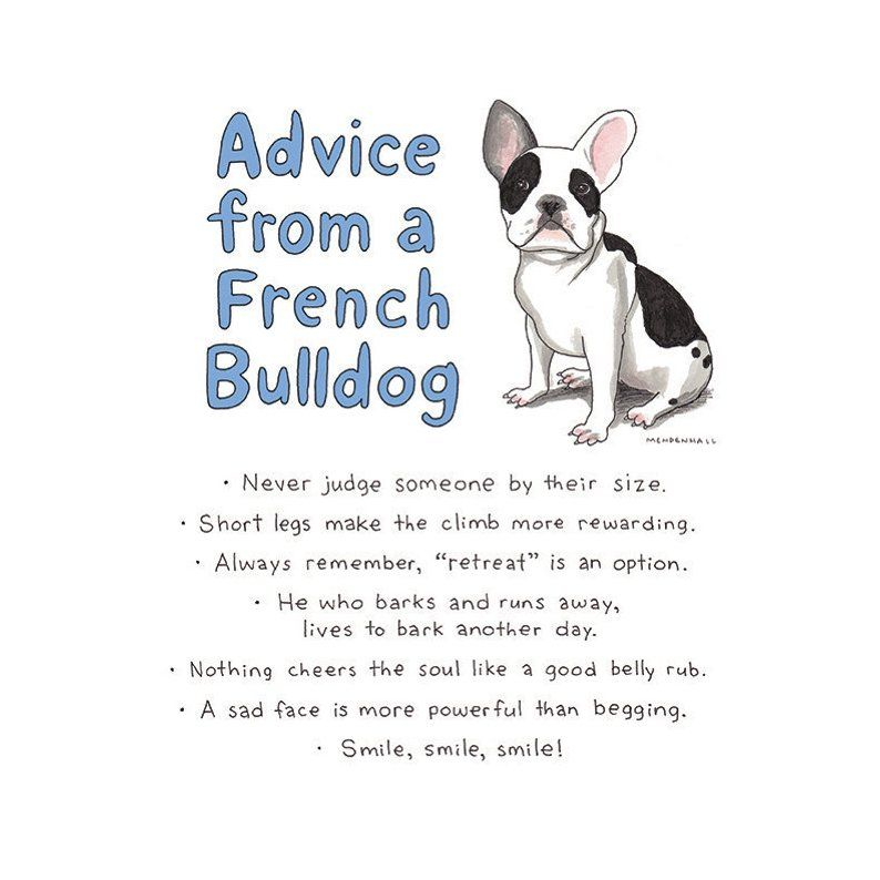 Puppies For Sale French Bulldog Puppies Puppy Quotes French