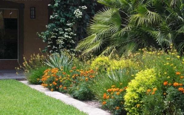 border florida yard Google Search Exterior, Yard, Plants