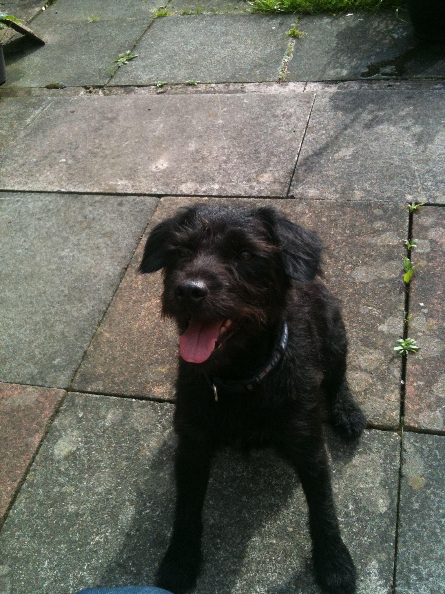 My patterdale terrier jack .