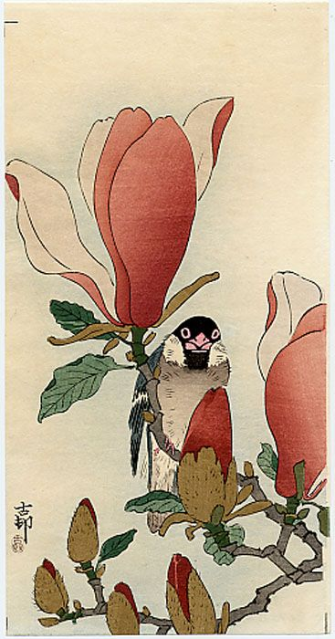 """""""A Java Sparrow on a Flowering Magnolia"""" by Ohara Koson, c.1910"""