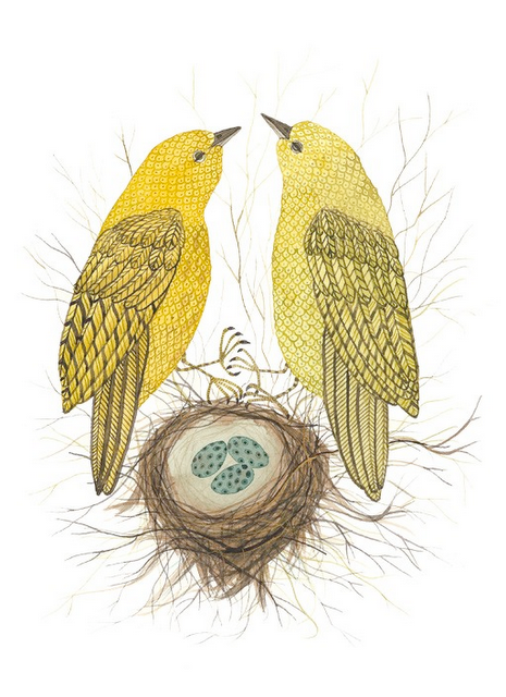 Yellow Warblers, by Holly Ward Bimba