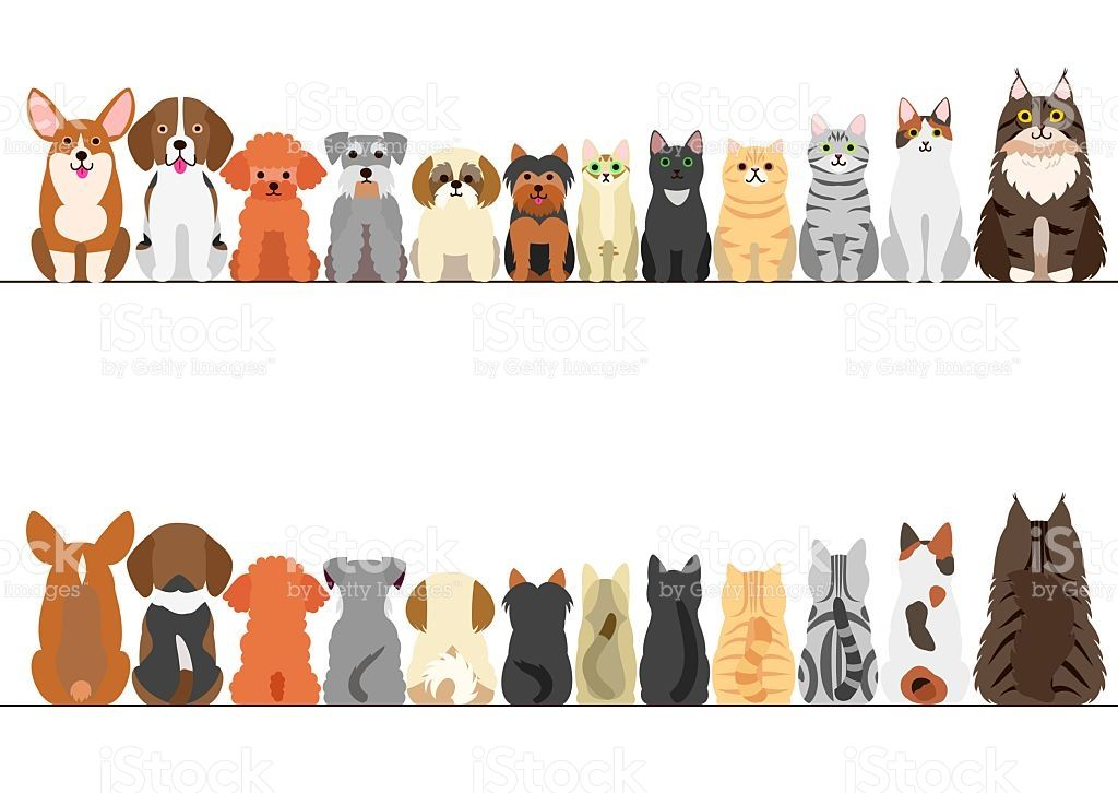 Cats And Small Dogs Border Set Front View And Rear View Dog Illustration Cat Illustration Dog Drawing