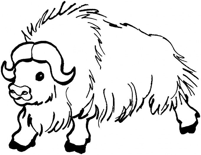 Yak Google Search Coloring Pages Cute Coloring Pages Toddler Coloring Book