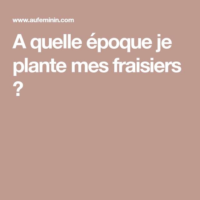Fraisiers : Comment planter, pailler et entretenir un ...