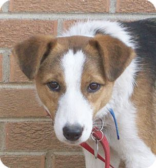 Dudley Border Collie Beagle Mix Kitten Adoption Dog Mixes Pets