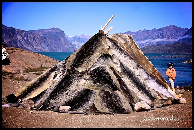 Inuit tent made from Seal skins. The traditional shelter used during the summer. & Inuit tent made from Seal skins. The traditional shelter used ...