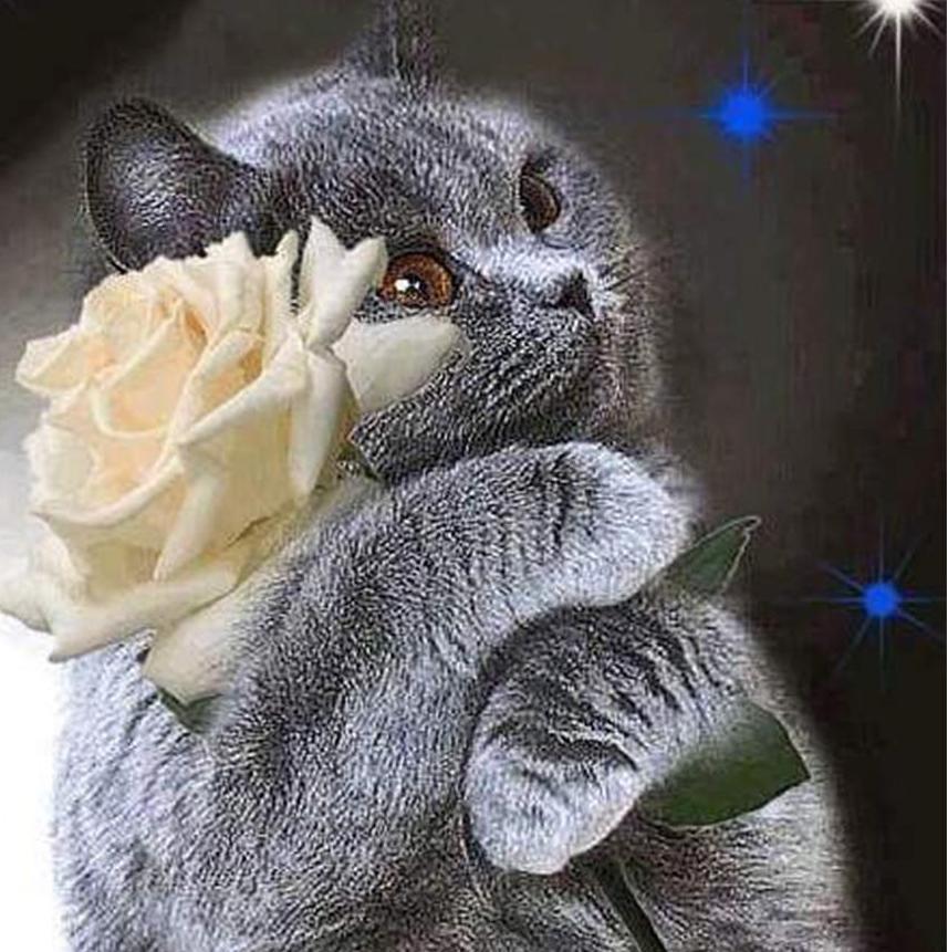 Открытка котенок дарит цветок, анимация картинки открытки