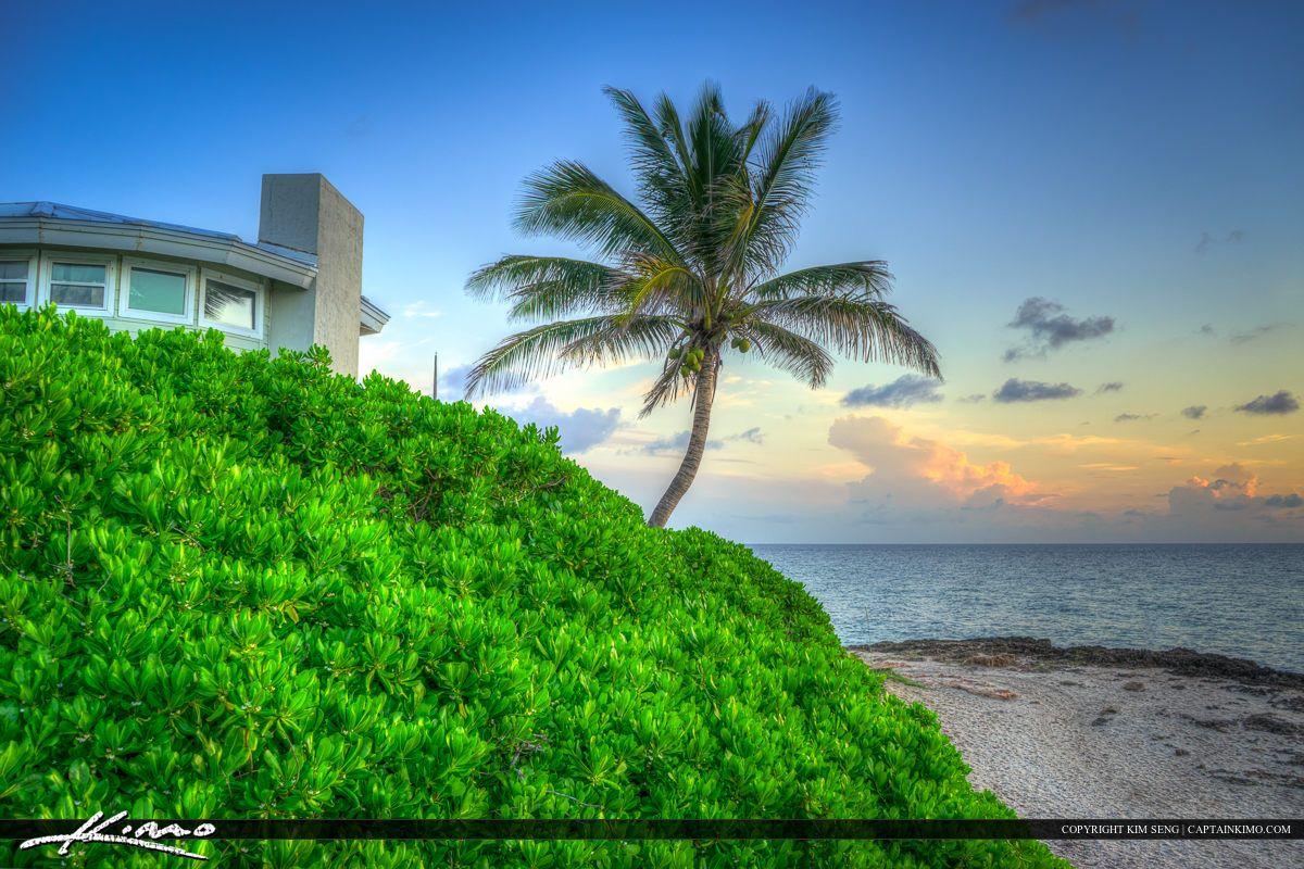 Coconut tree at beach Stuart Florida along Bathtub Beach | Florida ...