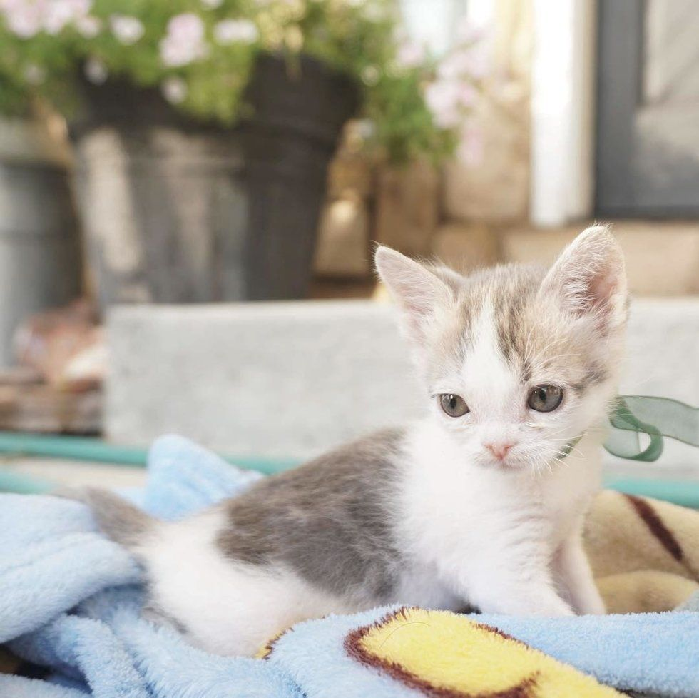 Young Woman Saves Kitten Who Was Found In Dirt While Others Have Given Up Love Meow Kitten Newborn Kittens Dog Blog