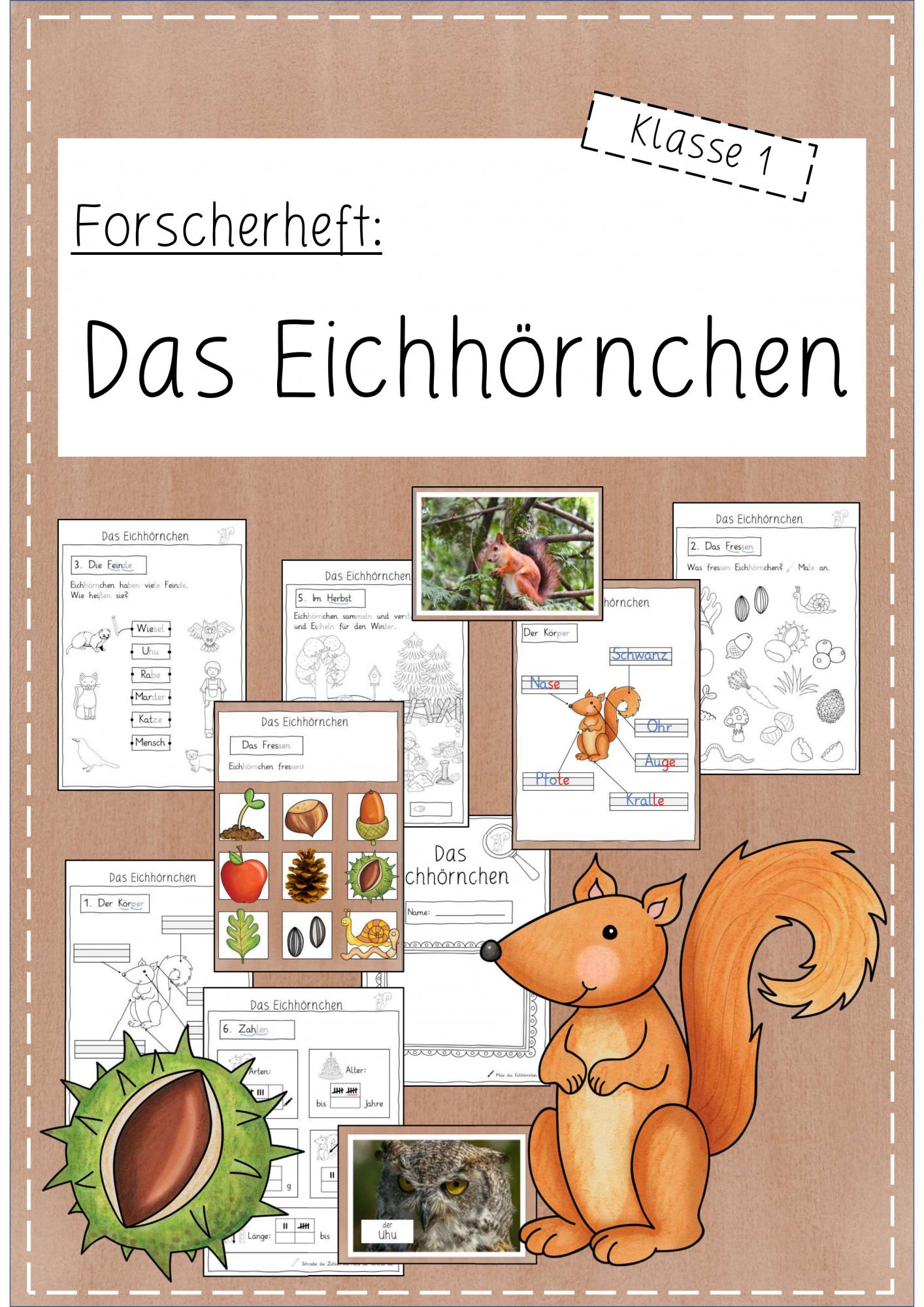 Forscherheft zum Eichhörnchen Klasse 20 – Unterrichtsmaterial in ...