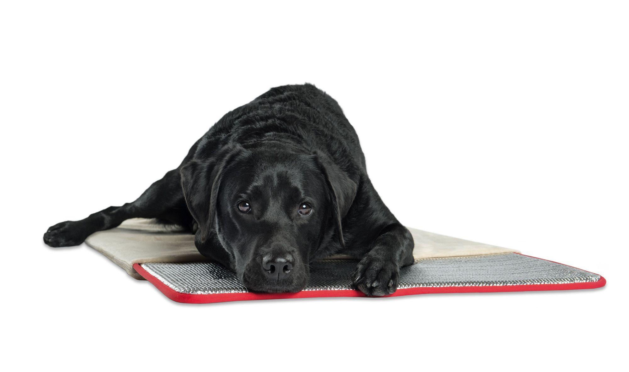 Pet Therapeutics Therawarm Self Warming Pad Dog Pet Beds Dog