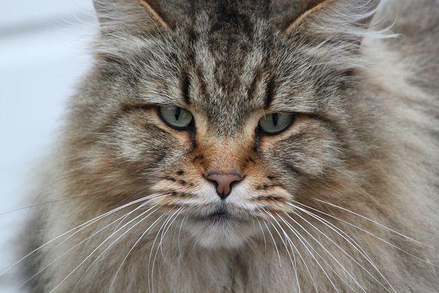 Pin on fluffy felines.....