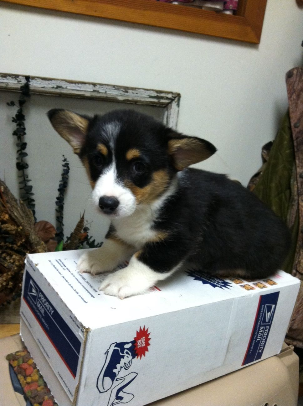 If I sits... I ship? http://ift.tt/2r8uEgY