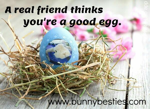 """A real friend thinks your a good egg.""  Bunny Besties"