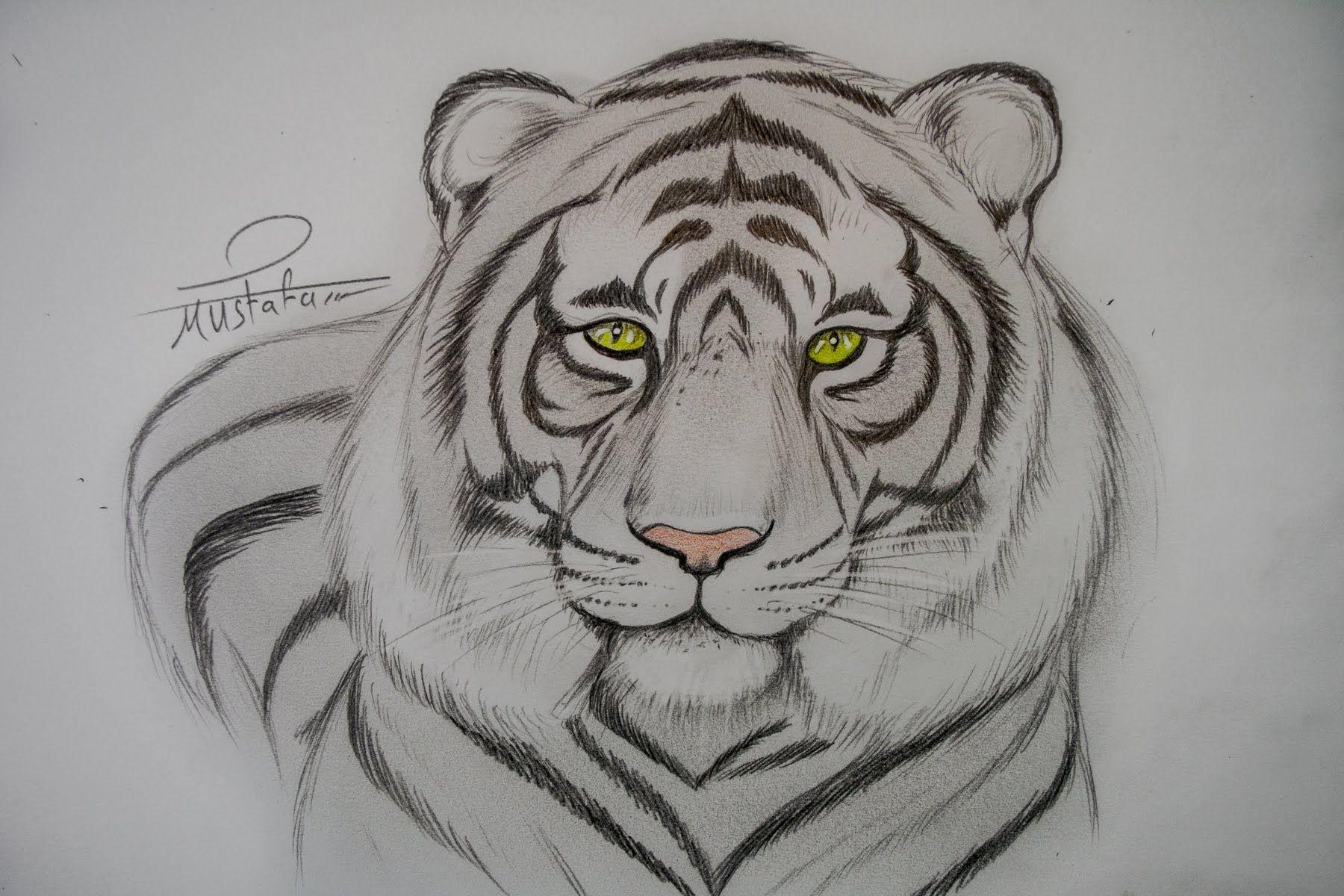 تعلم رسم نمر بالرصاص مع الخطوات للمبتدئين Animal Drawings Drawings Animal Tattoo