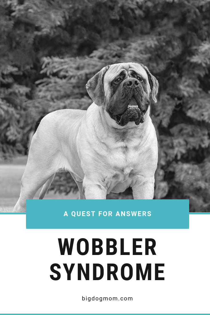 Wobbler Syndrome A Painful Intersection Of Diet And Genetics Large Dog Breeds Dogs And Kids Big Dogs