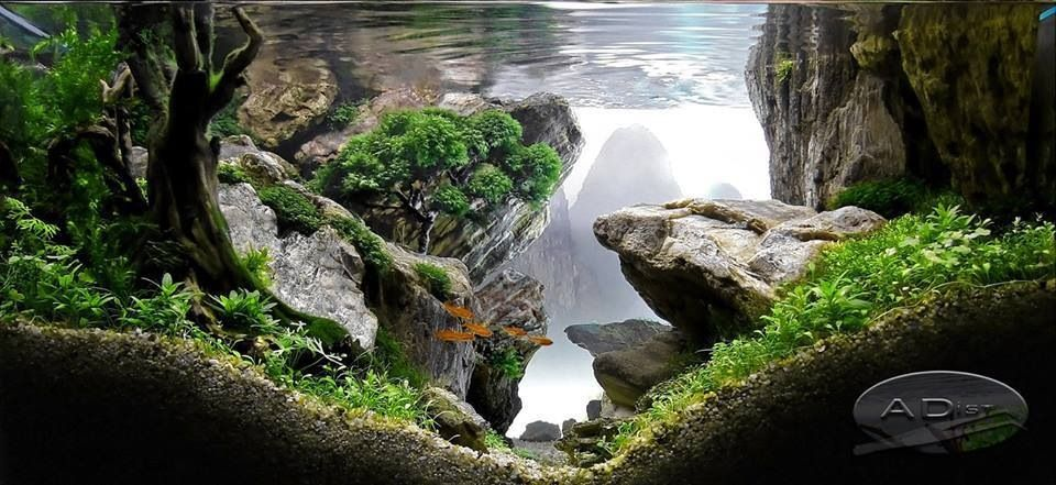 100 Aquascape Ideas | Aquariums, Plants and Fish tanks