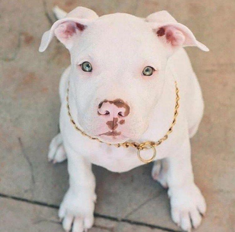 15 Fotos De Perros Que Tienen Unos Ojos Y Una Mirada