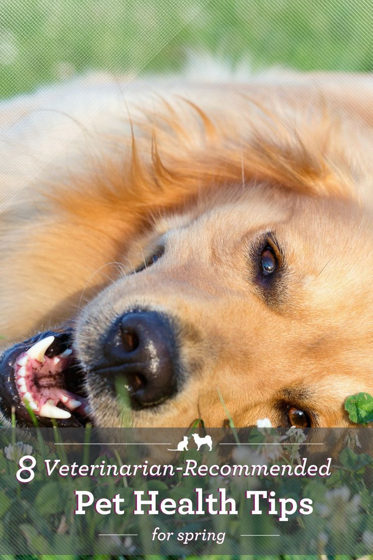 Spring Signals A Great Time To Check Up On Your Pet S Health Opt