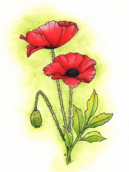 Beccys place anzac poppies poppies pinterest anzac poppy beccys place anzac poppies mightylinksfo
