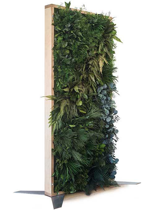 Raumteiler Raumteiler pflanzen, Moos pflanzen, Raumteiler