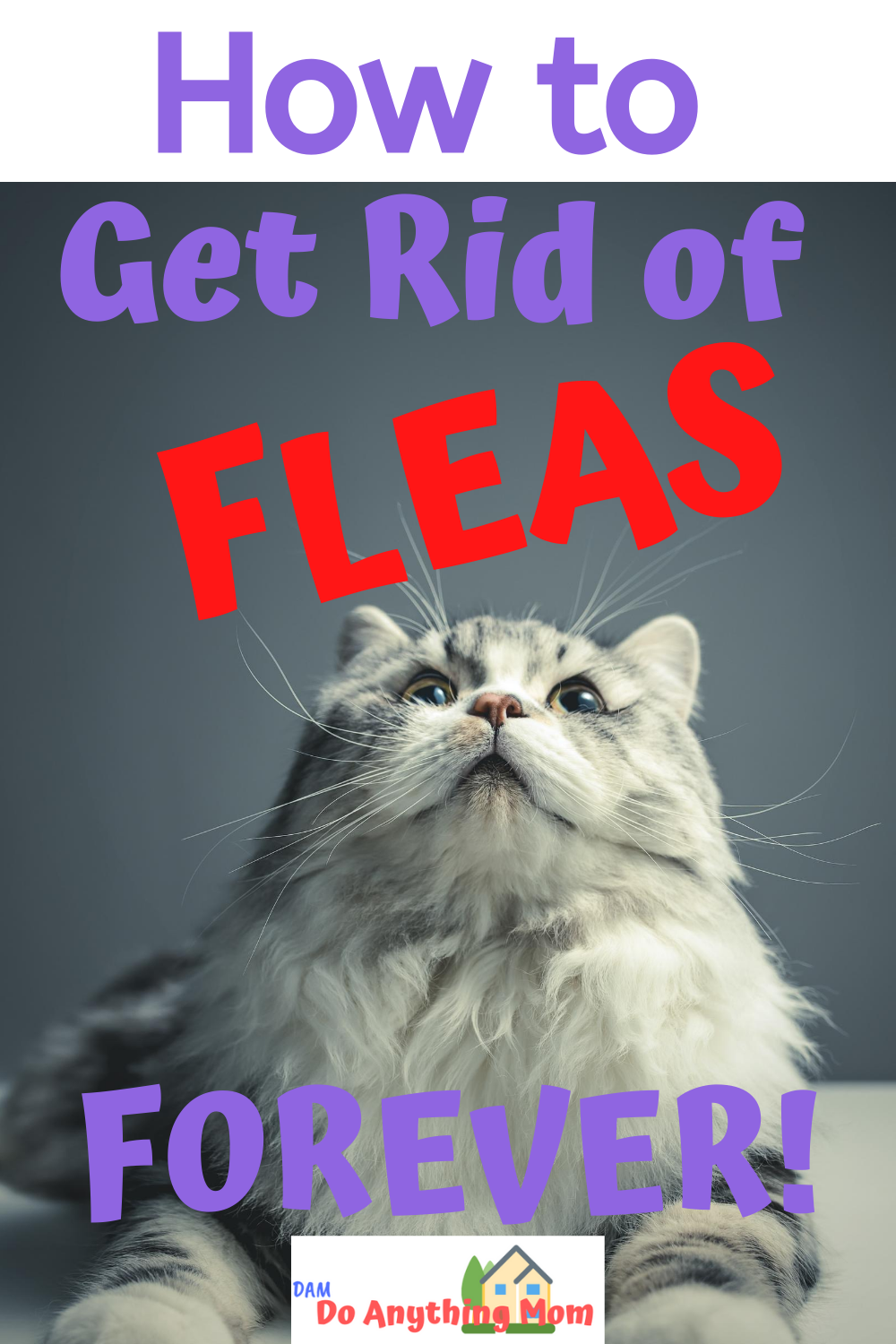 How To Get Rid Of Fleas On A Feral Cat
