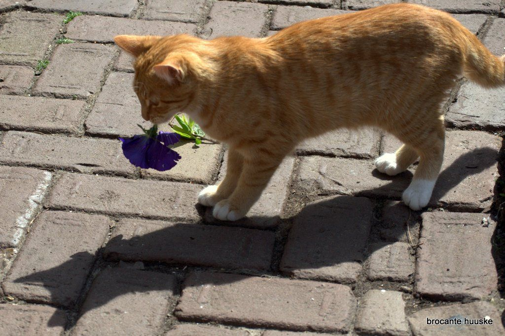 cat Kom Achterom