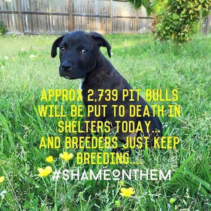 Stop breeding! Stop adopting!