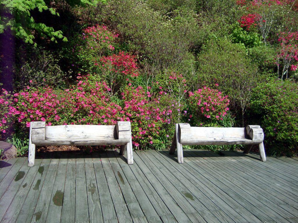 Garden and home zambia  The Garden of Morning Calm in Gapyeong Korea  Korea  Gardens