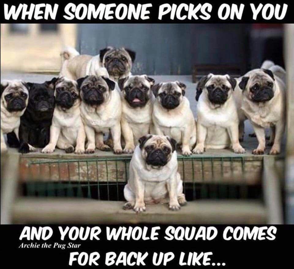 Gangster Pugs Haha Cute Pugs Pugs Funny Pugs