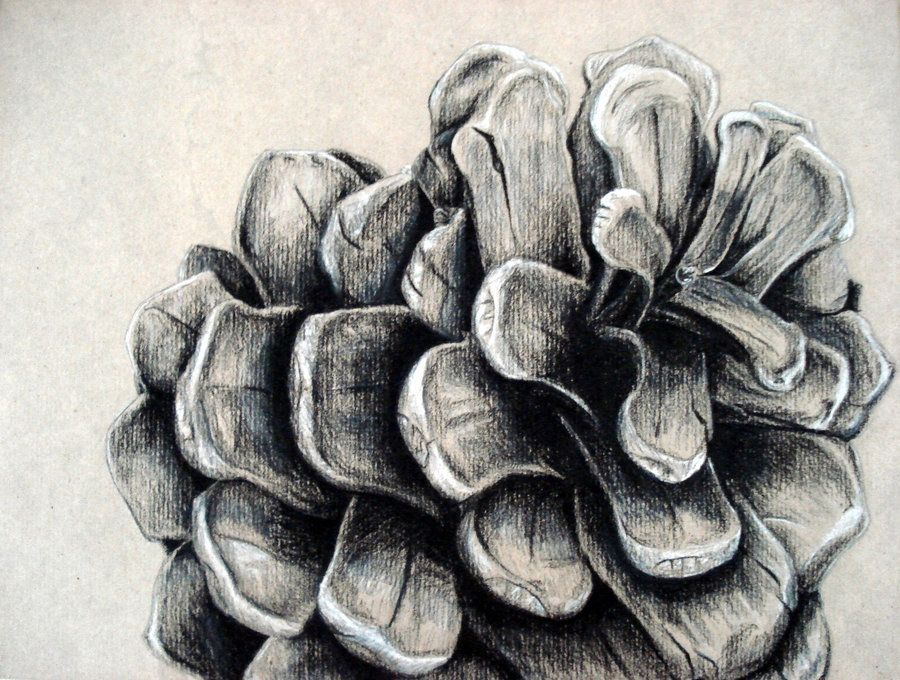 Image result for pencil drawing of a pine cone
