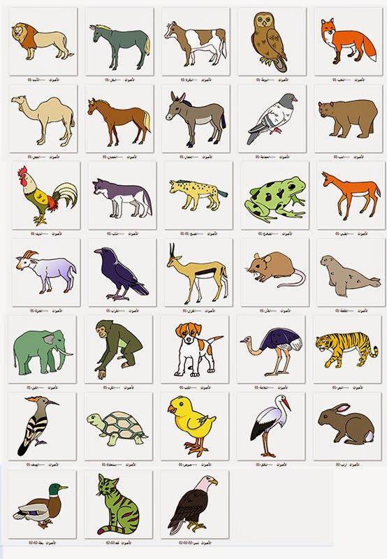 مشروع عصفور التعليمي صور وقصاصات فنية الحيوانات Learning Arabic Arabic Language Learning Cards