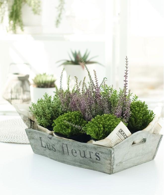 Como Sembrar Plantas En Cajas De Madera