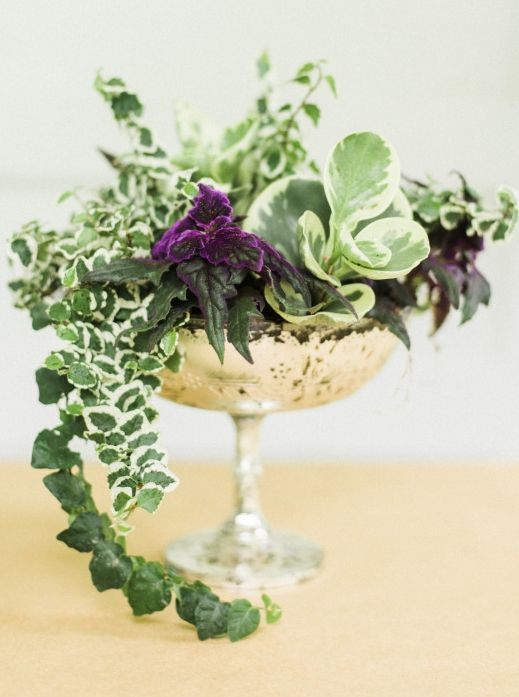 A living plant centerpiece makes a beautiful arrangement for a dinner party.