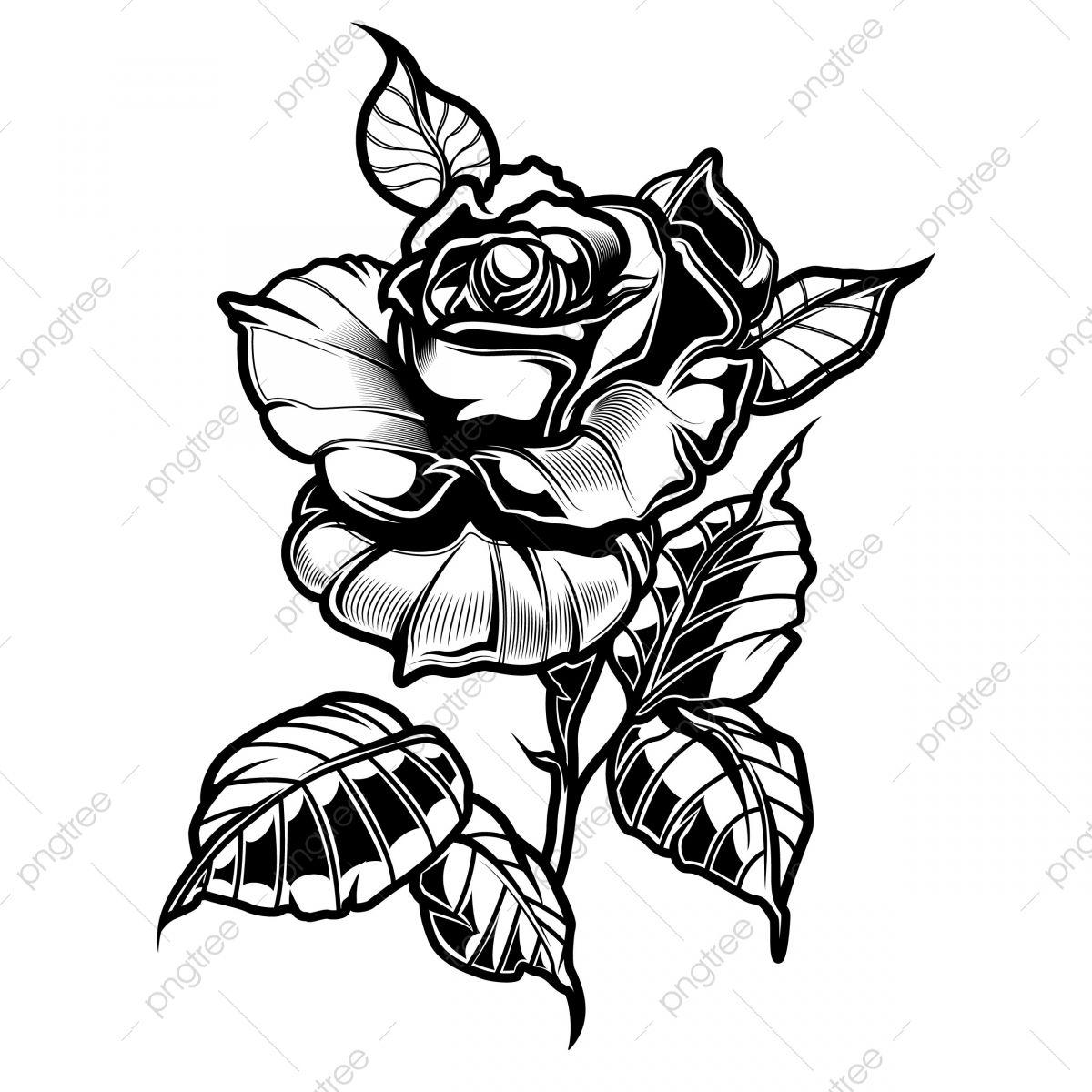 Rosas De Tatuagem De Vetor Com Folhas Em Fundo Branco Clipart De Vetor Rosa Tatuagem Imagem Png E Vetor Para Download Gratuito Rose Tattoos Black Rose Tattoos Rose Sketch