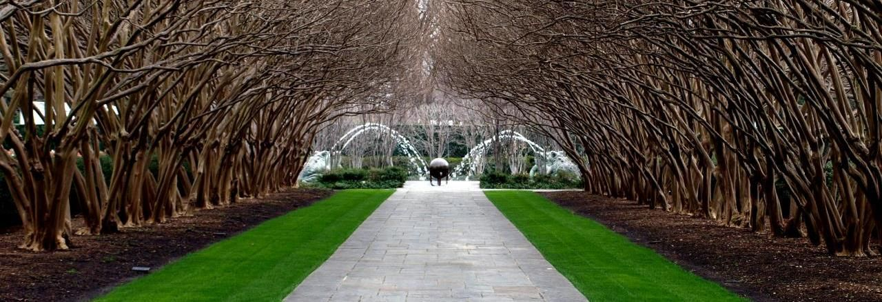Dallas Arboretum Crape Myrtle Allee